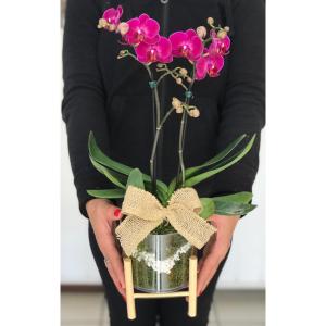 mini orquídea no cachepô acrílico